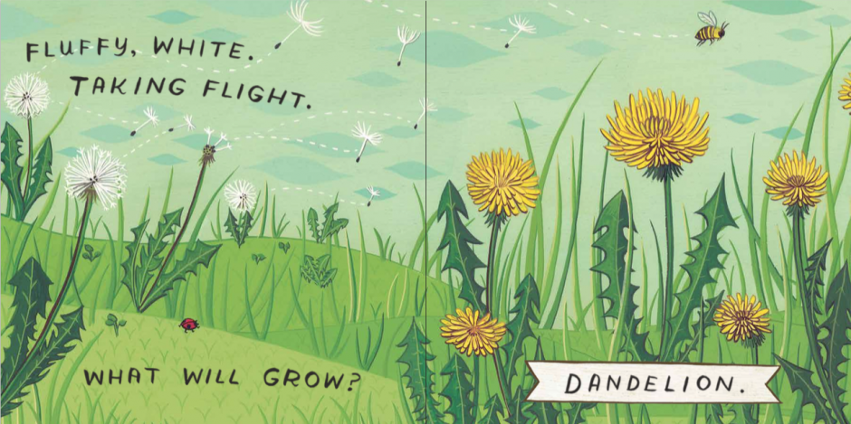 "What Will Grow? Dandelion! - illustrated by Susie Ghahremani / boygirlparty.com for picture book ""What Will Grow?"""